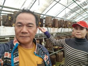 Eastern prickly pear, balloon flower root and ginseng promote 6th industry in Sancheong